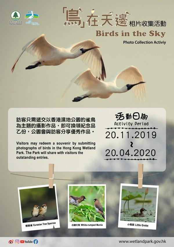 「鳥在天邊」相片收集活動